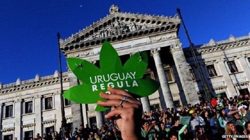 Por que o início da venda de maconha preocupa farmácias uruguaias