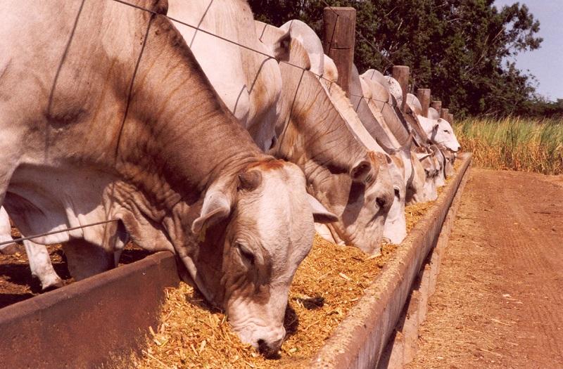Fazendeiro receberá indenização por vacas mortas após consumirem ração