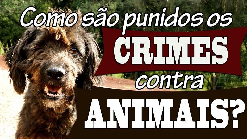 Crimes contra animais: Reynaldo Velloso quer julgamentos nas Varas Criminais