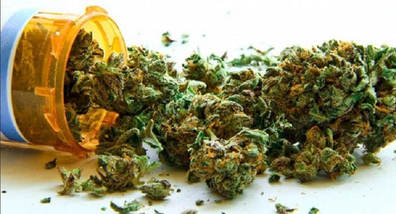 STF decide: Expropriação por cultivo de drogas pode ser afastada se o proprietário provar que não teve culpa