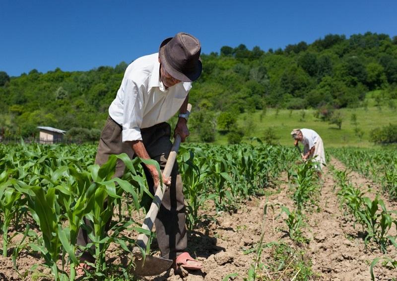 Prova testemunhal é válida para concessão de aposentadoria rural