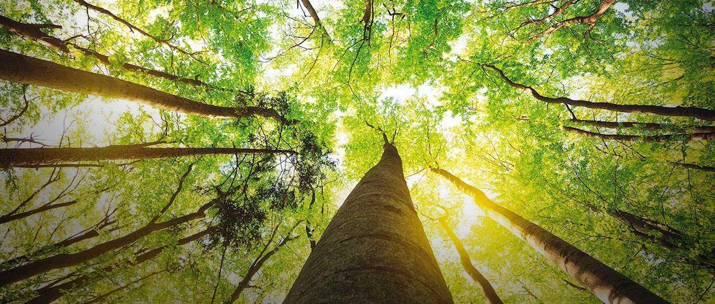 Como elaborar defesa/impugnação a multas ambientais? Passo a passo e Modelo!